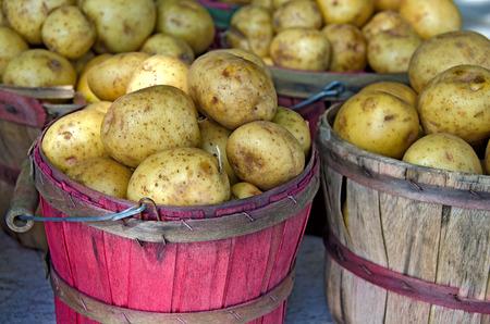 bushel: Yukon Gold in bushel baskets at the market