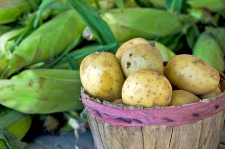 bushel: potatoes in bushel basket with sweet corn