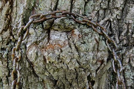 rusty chain: rusty chain on tree trunk Stock Photo