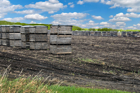 muck: onions in stacked wooden crates in Michigan muck field Stock Photo