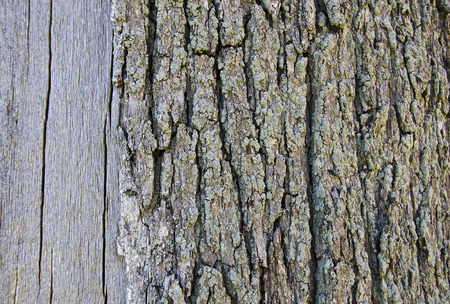 smooth: smooth and rough tree trunk