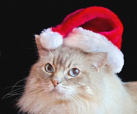 ragdoll: Ragdoll cat with Christmas hat impressionism