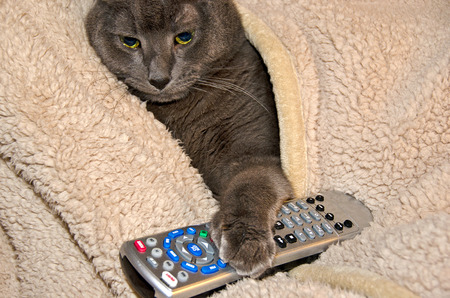 television remote: cat in blanket with paw on a television remote control