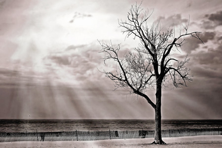 barren: Sunbeams on barren tree on Lake Michigan beach