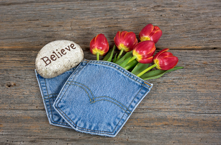 red tulips in blue jean pocket with inspirational rock