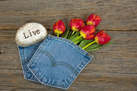 red tulips in denim pocket with rock