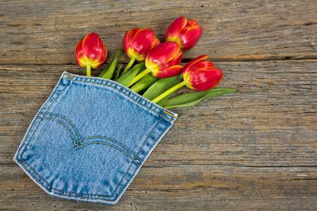 tulipan: czerwony tulipan bukiet w niebieskim jean kieszeni na tamtejsze drewna Zdjęcie Seryjne