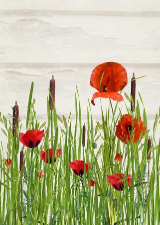 オレンジ色のポピーと背の高い草のガマ
