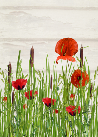 tall grass: orange poppies and cattails in tall grass