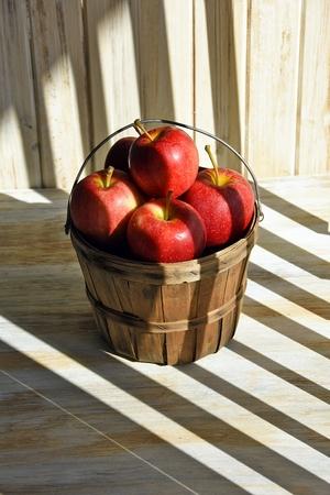 bushel: apple basket in striped shadows