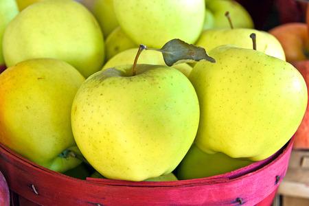 bushel: yellow apples in red bushel basket Stock Photo