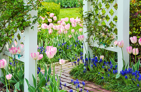 tulips and hyacinths in spring garden with brick walkway