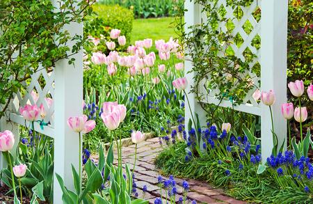 tulpen en hyacinten in het voorjaar de tuin met bakstenen loopbrug