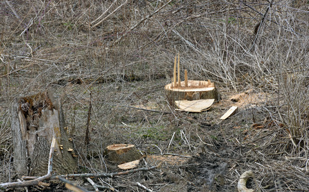 wasteland: fresh cut tree in barren rural wasteland