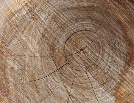 fissures: close of up oak tree with rings and fissures