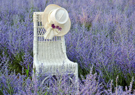Hat on wicker chair in field of purple Russian Sage Foto de archivo