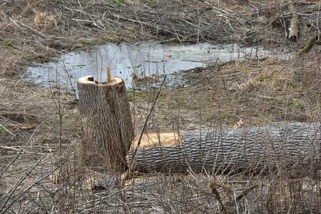 desolate: Cut tree in desolate swamp land