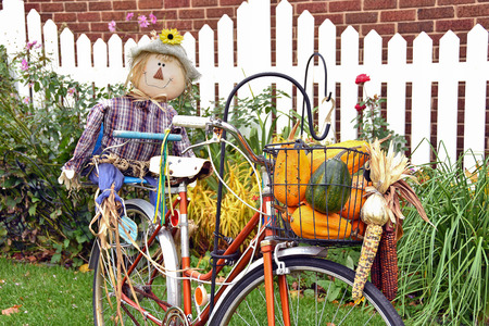 autumn scarecrow: autumn scarecrow on a bicycle with gourds and Indian corn