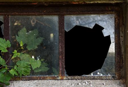 windowpane: ivy growing in broken windowpane