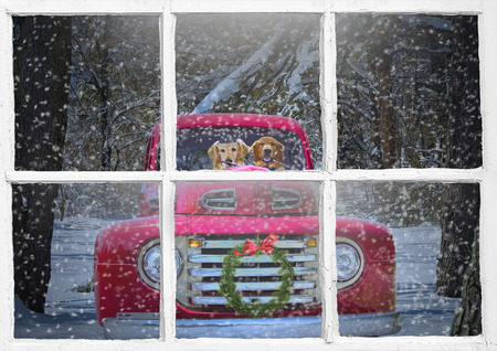 golden retrievers in retro red truck with Christmas wreath in window framing