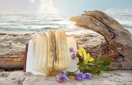 purple roses: journal and purple roses on beach with driftwood log Stock Photo