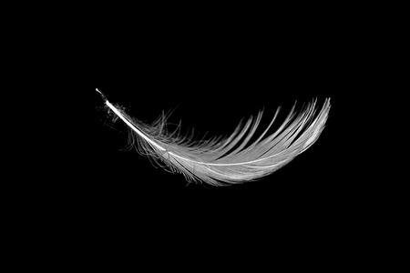 white feather: white seagull feather isolated on black Foto de archivo