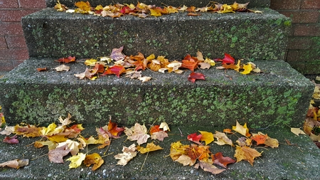 autumn maple leaves on concrete steps with moss