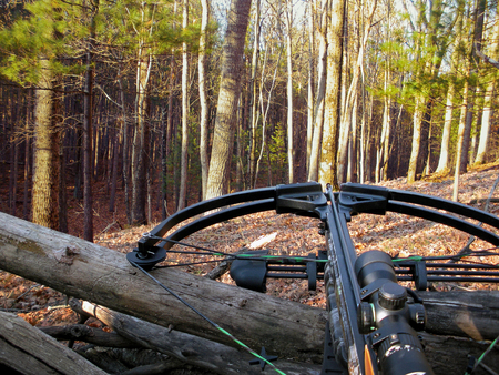 hunting crossbow on tree trunk in autumn woods