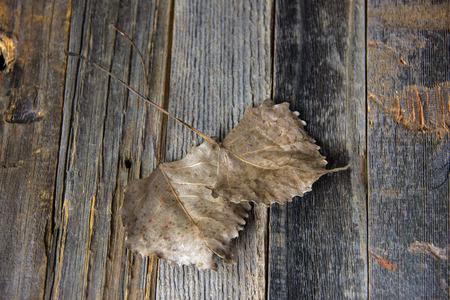 소박한 나무에 말린 된 심장 모양의 잎의 쌍