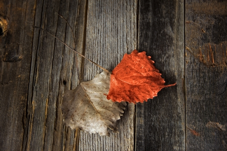 orange and brown dried heart shaped leaf on weathered wood Imagens