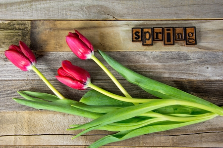 Red spring tulips on wood with vintage letterpress type sign