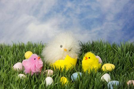 부활절 달걀과 잔디에 병아리