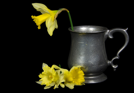 yellow daffodil in antique pewter pitcher isolated on black