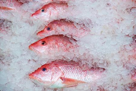 Captura de pargo rojo fresco cubierto de hielo Foto de archivo - 83036924