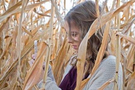 teenage girl with cell phone in autumn cornfield Stock Photo
