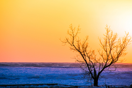 silhouette of winter tree on beach with fence and partially frozen Lake Michigan with glowing sunset sky
