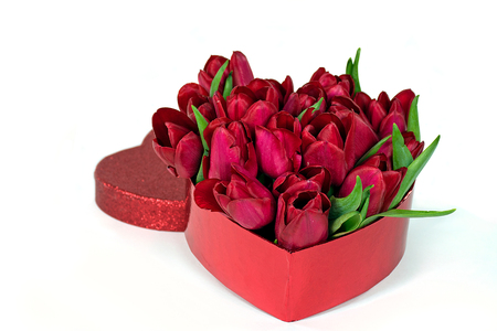 red tulips in valentine heart box isolated on white background Stock Photo