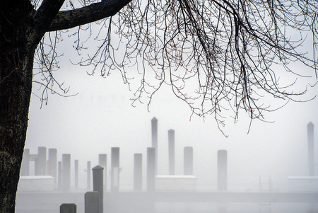 silhouette of winter tree and dock pilings fog at lake marina