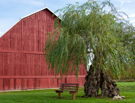 Red wooden barn with weeping willow tree and empty bench on grass