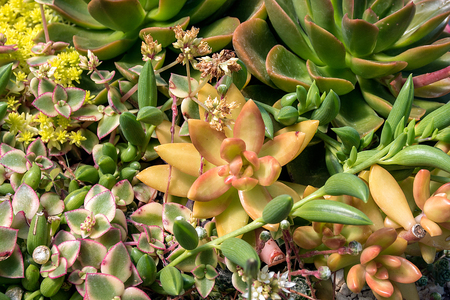 close up of a variety of succulent plants in garden