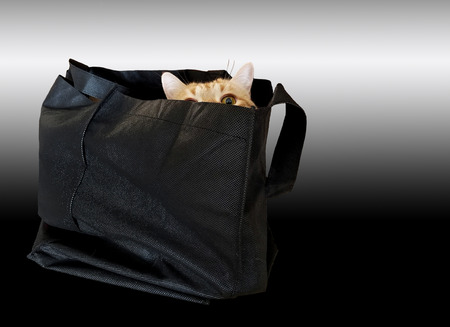 gold tabby cat hiding in black fabric bag isolated on gradient black and silver background