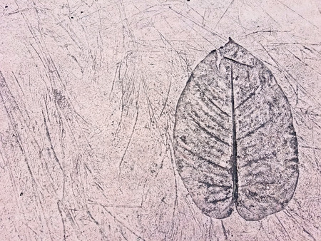 close up of a leaf design in pink concrete Stock Photo