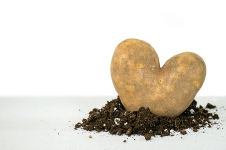 closeup of heart shaped russet potato in dirt Stock Photo