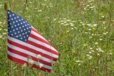 American flag in a country field of white daisy wildflowers