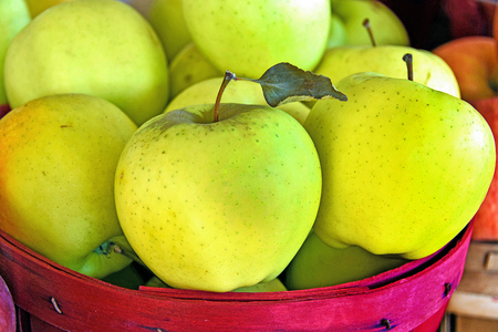 close up of yellow apple with leaf in red bushel basket Stock Photo