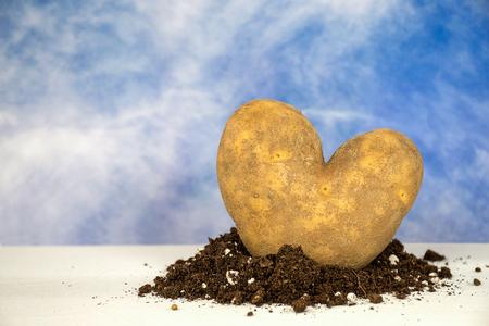 closeup of heart shape Idaho potato in dirt with summer sky background