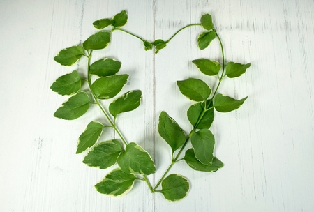 close up of green ivy in a heart shape on whitewashed wood