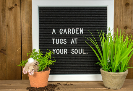 bunny in potted plant and dirt with garden quote on message board