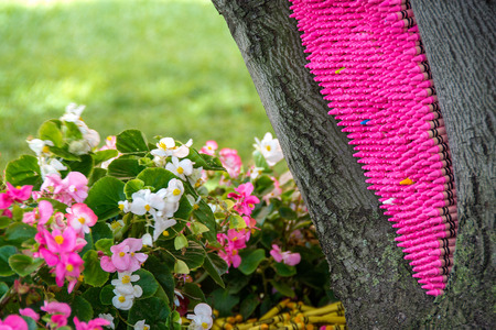 bright pink crayon stacked in tree trunk with begonia plant