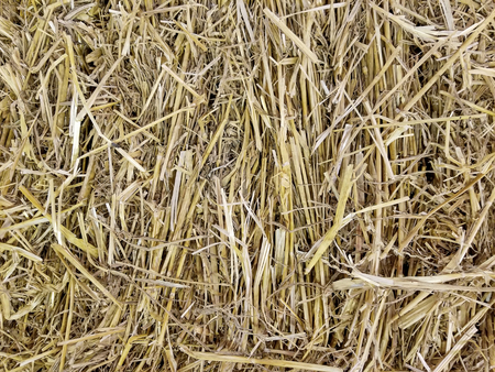 close up of golden dried hay bale